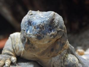 lizard47mod