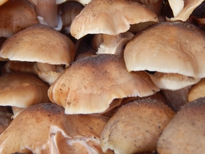 fungus01