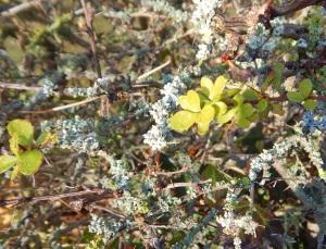 lichen01