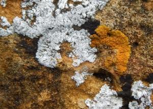lichen02wall