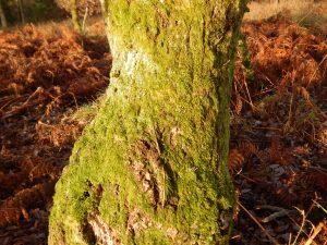 moss03tree